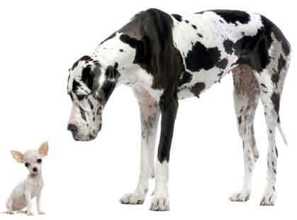 unnamed 21.04.06 Anche la forma (del cane) è importante