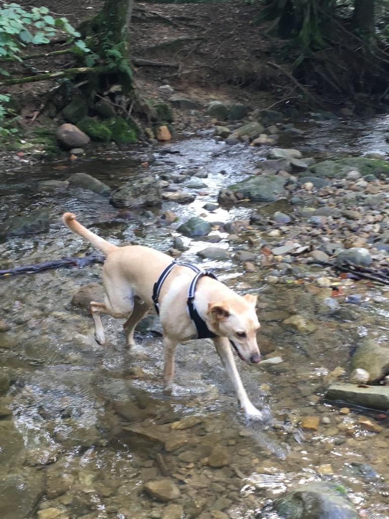 snoopy Acqua buona, acqua pericolosa: quando aiutare il cane