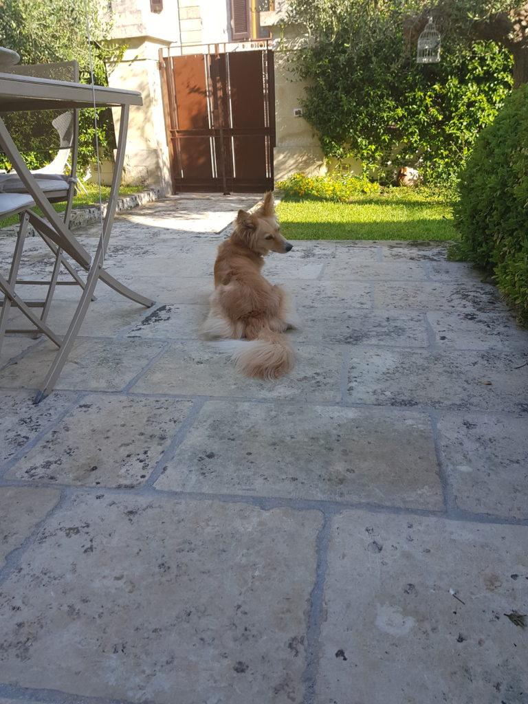 20190727 081321 Il cane in vacanza: 5 consigli e una considerazione