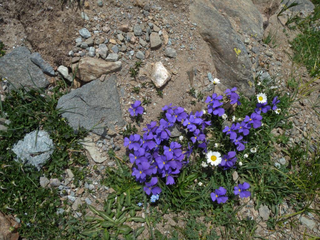 3 metabasiti1light 13# Vallone delle Cime Bianche: sul fondo dell'oceano perduto