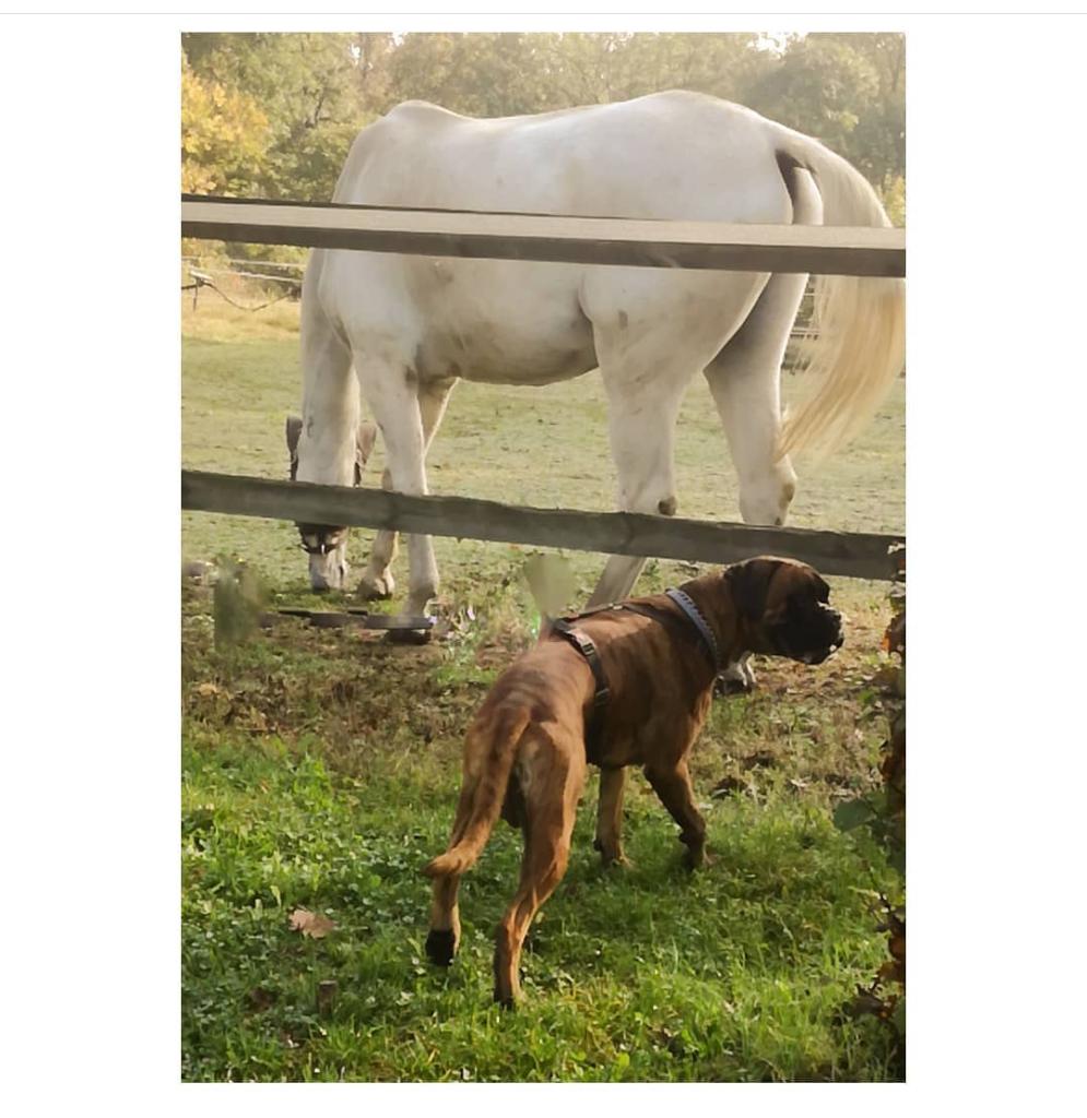 IMG 20200716 214534 Cani e fauna in montagna: come comportarsi