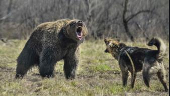 Schermata 2020 07 21 alle 13.38.30 1 Cani e fauna in montagna: come comportarsi