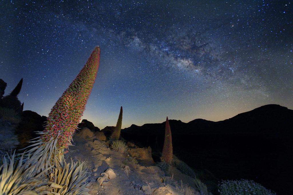 Fotografare le stelle: fotografia notturna.
