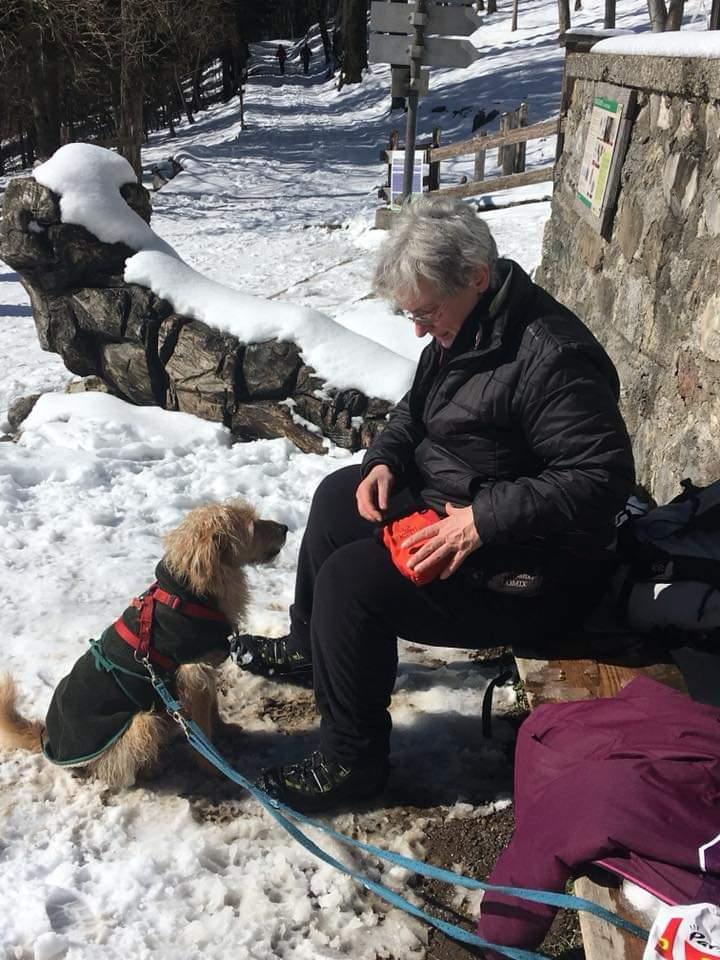 Cane sulla neve: bisognerebbe chiedersi sempre si i nostri cani soffrono il freddo
