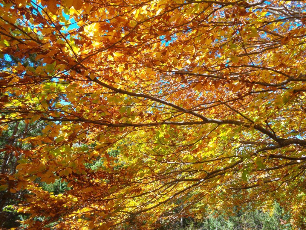 123681777 10222300492374561 430395889037119879 o 18# Valle dell'Avella, Majella:  foliage e grotte, che spettacolo!
