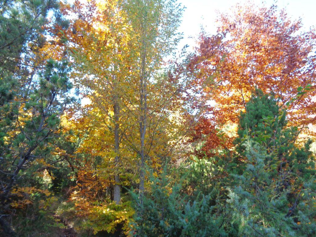 123686463 10222300530975526 7210226310501441881 o 18# Valle dell'Avella, Majella:  foliage e grotte, che spettacolo!