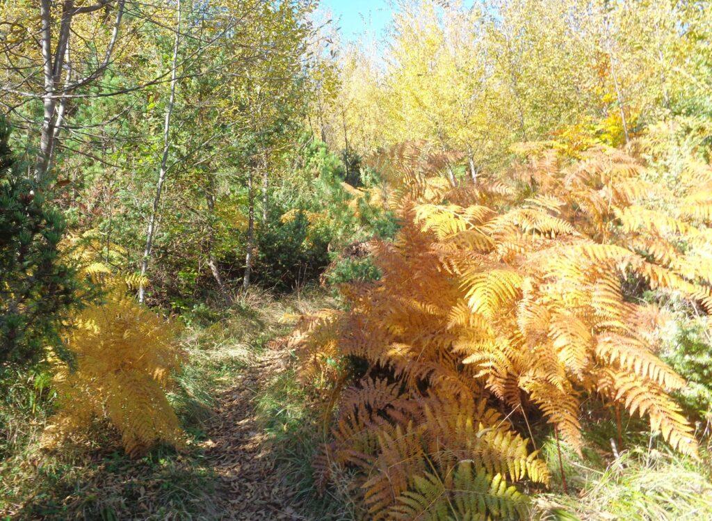 123718125 10222300523655343 1896926637071269307 o 18# Valle dell'Avella, Majella:  foliage e grotte, che spettacolo!
