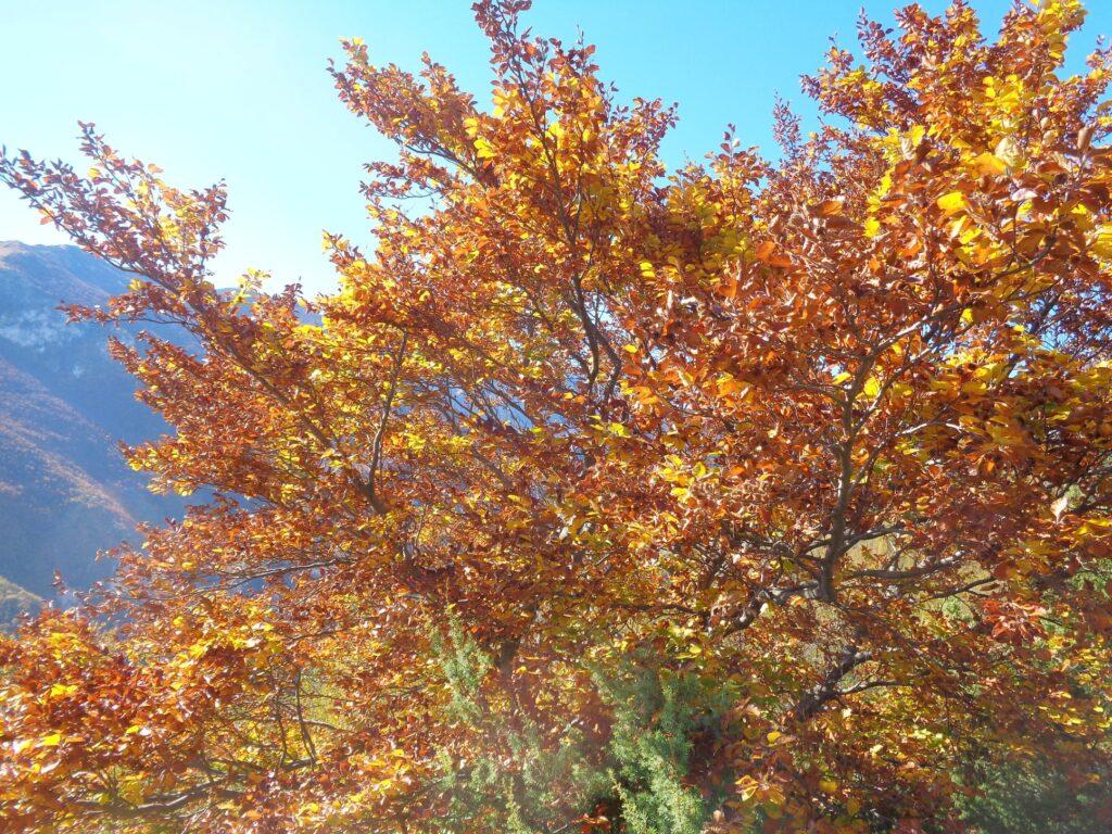 123769241 10222300491654543 7835400480485918776 o 18# Valle dell'Avella, Majella:  foliage e grotte, che spettacolo!