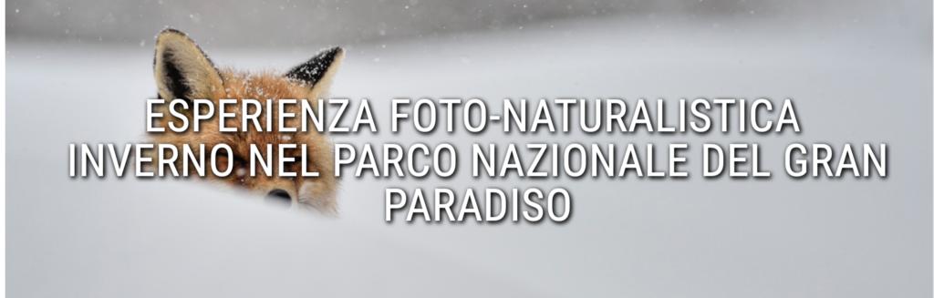 Schermata 2021 02 12 alle 14.33.53 5 consigli per fotografare la neve