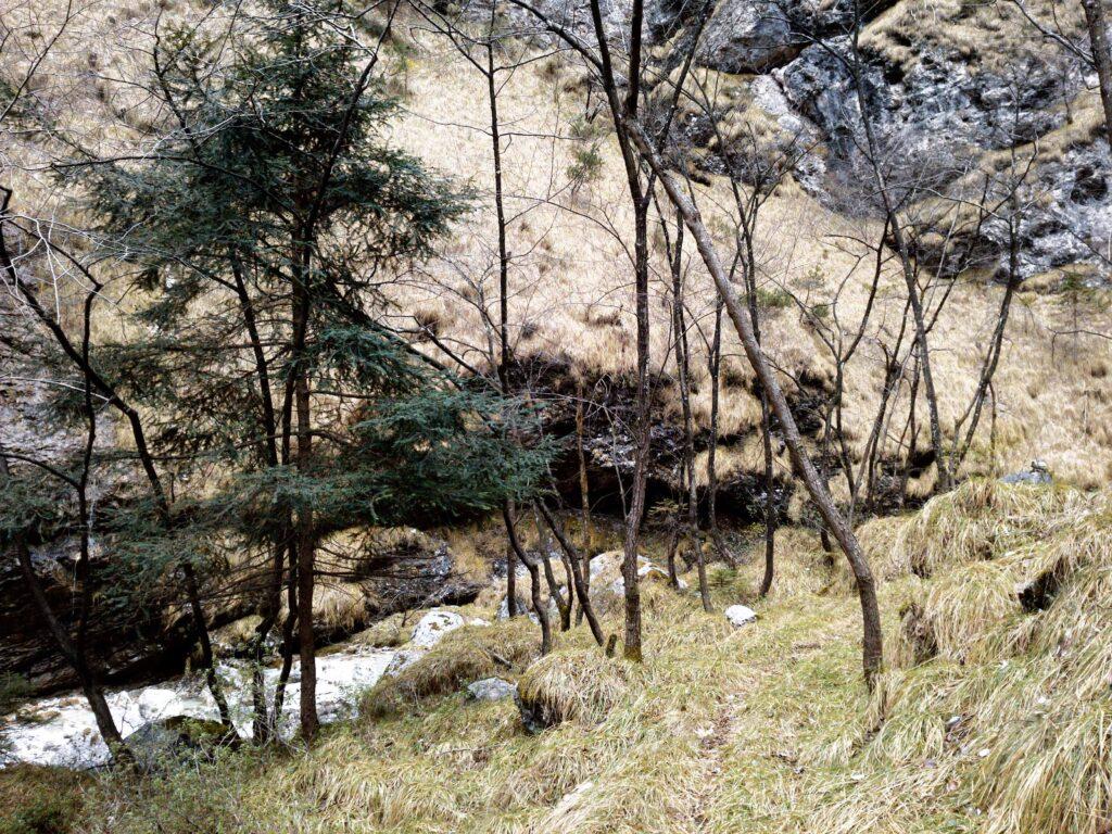Tasso in Val Salet, a valle del sentiero di salita, le pendici delle nostre montagne. Al Mont Alt - Dolomiti Bellunesi