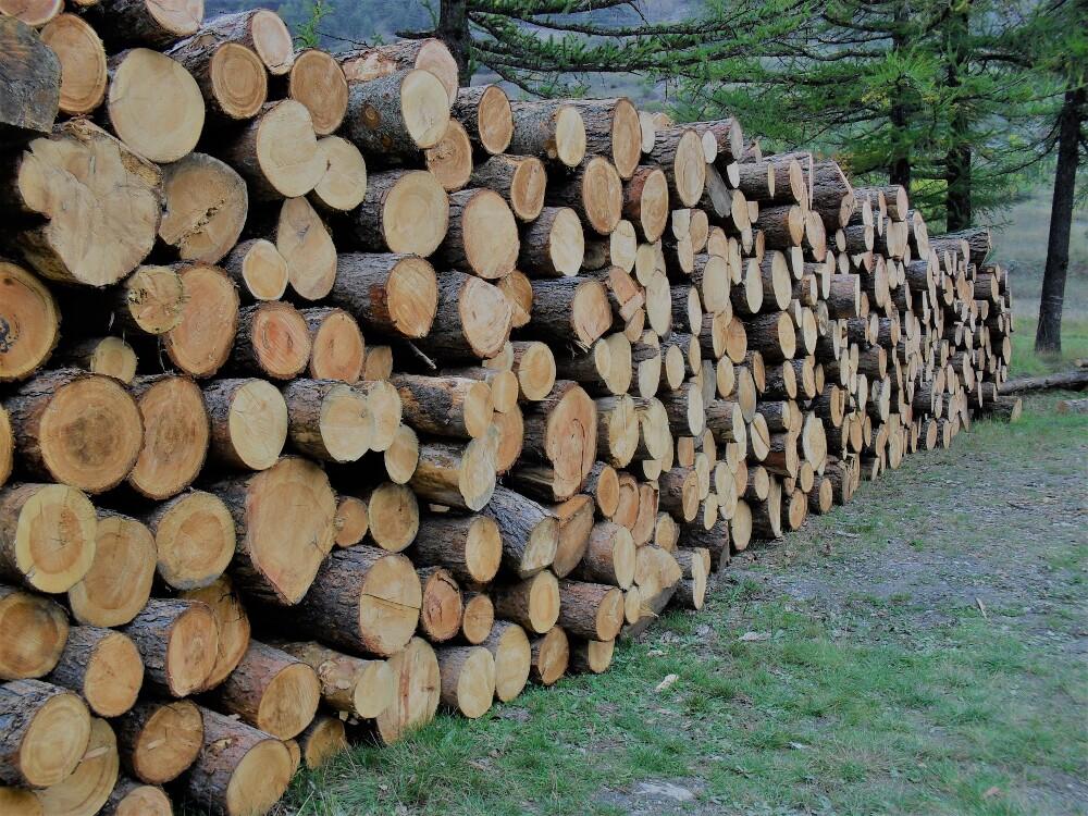 TracciaLegno acquistare legno locale in Piemonte