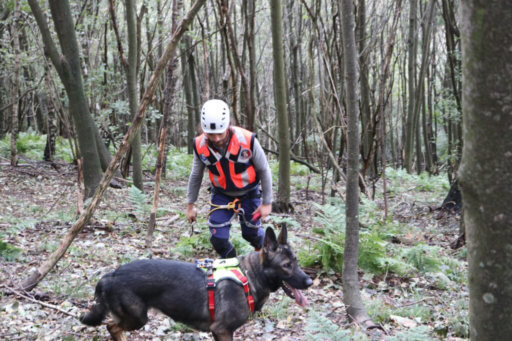 Cani da ricerca dispersi