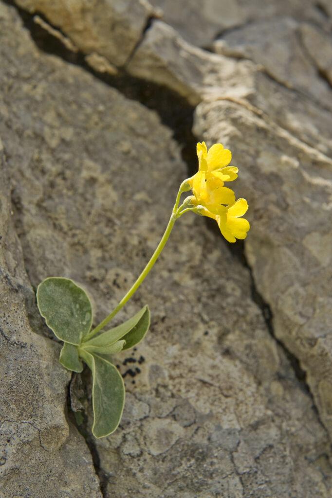 flora baldo 3 soggetti da fotografare in primavera in montagna