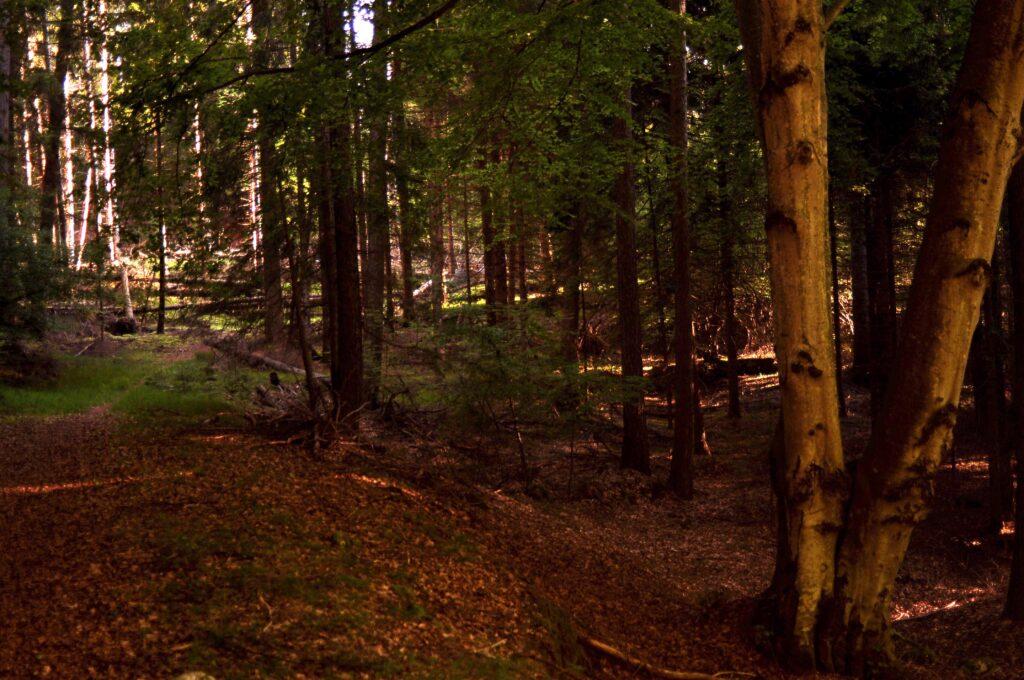 Il Pianaz, quota 1050 m con il caratteristico faggio a 4 quattro tronchi
