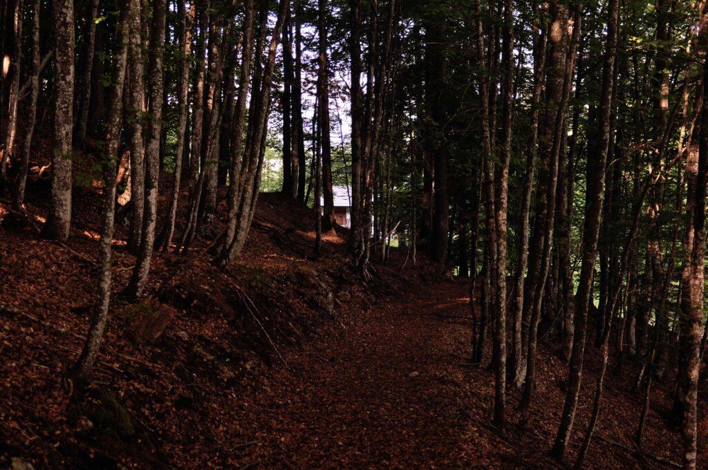 Il ricovero forestale Le Mandre, quota 1373 m - bus de le neole